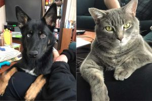 Rufus and Aurora Nichols employee's pets collage